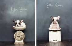 oh my! I wish I would have thought about this when our english bully was a baby... now, he'd break the scale!