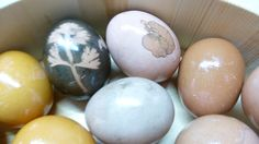 Jedes Jahr vor Ostern färben wir Ostereier. Schön bunt denn das gehört dazu. Viele wünschen sich ungiftige, natürliche Farben, aber welche Kräuter und Pflanzen eigenen sich denn nun wirklich dafür?... Bunt, Workshop, Natural Colors, Plants, Basteln, Atelier