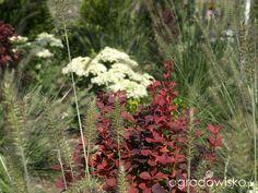 Tu ma być ogród :) - strona 213 - Forum ogrodnicze - Ogrodowisko