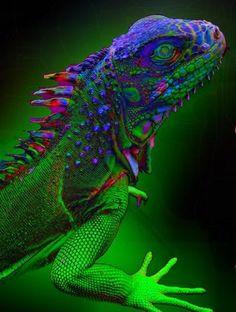 D says: Tie-dye Lizard!