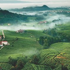 Valdobbiadene vineyards