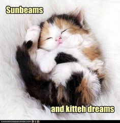 LoL by: muriell . Tagged: kittens , cute , sunny , happiness Share on Facebook http://sulia.com/channel/cats/f/371459e063e18a3d2bf7352ead15c6f2/?
