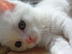 white cat :-))