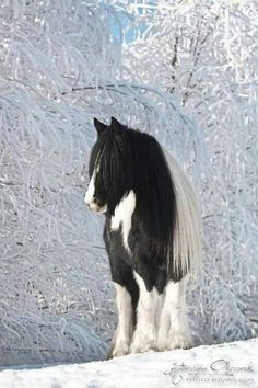 Horse and snow-covered trees