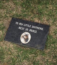 Shit Gardens (@shitgardens) • Instagram photos and videos Pet Cemetery, Fish Cat Toy, Paper Towel Holder, Rest In Peace, Toy Sale, Funny Cats, Funny Pictures, Photo And Video, Pets