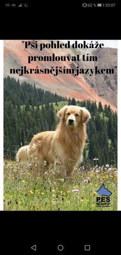 Dog Cat, Cats, Animals, Quotes, Animal Pictures, Quotations, Gatos, Animales, Animaux