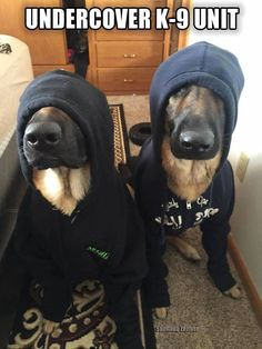 Friday Funny: Undercover K-9 Unit on the JOB! LOL Have a wonderful and safe weekend.