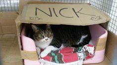 Come potete già vedere dalla foto, questo micione si chiama Nick. Nick è arrivato in Gattile a causa di un caso grave di allergia di un membro della famiglia: purtroppo, dopo mesi di cure e tentativi, la situazione non dava alcun segno di miglioramento. Era un micio amato e viziato: tanta pappa, vaccini in regola, …