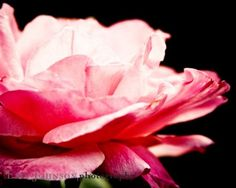 Shoply.com -Dreamy Pink Fine Art Photography Print 8x10. Only $20.00