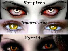 I got: Hybrid! I knew it! You're the mix between werewolf and vampire, sharing traits with them. You're intimidating and you always stand up for your loved ones no matter what and are very solitary but sometimes you just like to just chill like normal