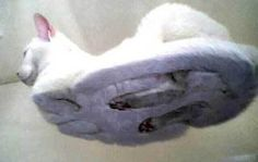 Cat on Glass Table via imgfave #Cat
