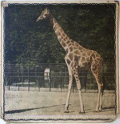 Zoologie / Zoology - Irenaeus Kraus - 20th Century Ephemera