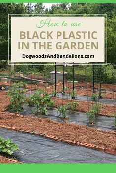 to Use Black Plastic In Your Garden Steps to take and how to plant when using black plastic in your garden easy garden black plastic gardening for beginners garden ide. Vegetable Garden For Beginners, Home Vegetable Garden, Gardening For Beginners, Gardening Tips, Flower Gardening, Garden Steps, Diy Garden, Garden Cottage, Garden Bed