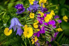 Colorful bouquet! © Popi Kmb