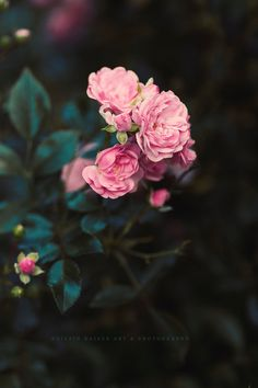 Ideas Flowers Background Rose For 2019 Amazing Flowers, Vintage Flowers, Flowers In Hair, Pretty Flowers, Wild Photography, Flower Photography, Beautiful Flowers Wallpapers, Flower Aesthetic, Aesthetic Backgrounds