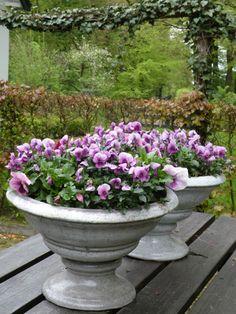 Grote potten gevuld met violen. Direct een kleurrijk geheel.