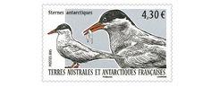 COLLECTORZPEDIA: TAAF Stamps Antarctic tern (Sterna vittata)