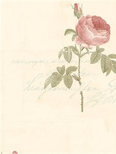 Stylish rose with cursive script wallpaper. This would be perfect in a powder room, bedroom or lounge. From the book Rose Garden AmericanBlinds.com