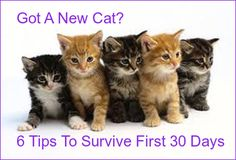 Survivng the first thirty days after bringing home a new cat doesn't have to be a trial and error experience. Ultimately, a good plan will mean survival for both owner and cat. Read on for some details on what to do and what not to do.