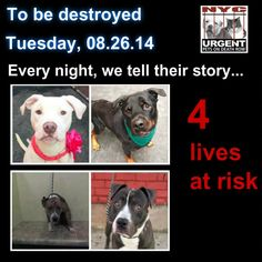 4 beautiful dogs are scheduled to die tomorrow Tues. 08/26/14. Please share their story everywhere. We only have tonight to help give them their future. This is a VERY high kill facility so their time is short. To rescue a Death Row Dog, Please read this: http://urgentpetsondeathrow.org/must-read/ To view the full album, please click here:    https://www.facebook.com/media/set/?set=a.611290788883804.1073741851.152876678058553&type=3