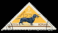 sellos postales de perros salchichas: Romiania - CIRCA 1965: Un sello de correos impreso en Rumania muestra dachshund, alrededor del año 1965.