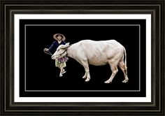 Farmer And Water Buffalo Framed Print By Ian Gledhill