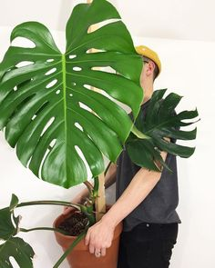 """(@houseplantclub) """"Where you headed with that Monstera, Tylor? Bring it over here! : @urlocalplantboy thanks for…"""""""