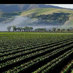 Salinas Valley California is the place where mice and men take place. This is the farm that all the characters except Curley's wife works.