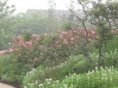 Oudolf.com - Piet Oudolf - Gardens - Private gardens - Nantucket Island - Nantucket Island 4
