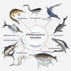 Will art for science (and video games) - Diapsida: The Cladogram Version · 20 March. Giant Animals, Animals And Pets, Reptiles And Amphibians, Mammals, Octopus Vulgaris, Alien Concept Art, Extinct Animals, Prehistoric Creatures, Science