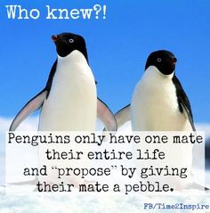 """Penguin love quote via """"Time 2 Inspire"""" at www.Facebook.com/Time222Inspire"""