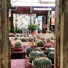 garden, desing, cactus, succulents