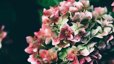 Wallpaper: http://desktoppapers.co/np74-flower-bokeh-romantic-nature/ via http://DesktopPapers.co : np74-flower-bokeh-romantic-nature
