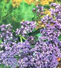 If you're looking for a flower that's easy to grow and sells well, consider growing statice this year. Originally published as