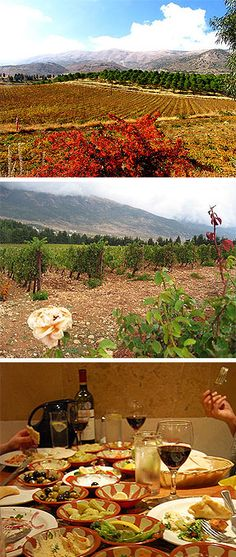 Wine tasting Kefraya Lebanon - Lebanon is also known as a wintage country and has been producing wine for more than a thousand years. | to share on http://www.skilebanon.co.uk/wine-tasting-trips-lebanon.html