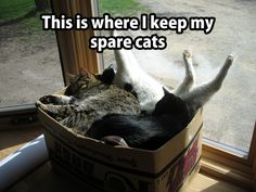 Spare cats =^..^= www.kittyprettygifts.com #cats #lolcats #memes #cute