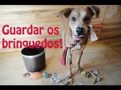 Como ensinar seu cachorro a guardar os brinquedos - Adestramento Positivo - Dog Training - YouTube