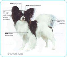 Milt's dog Pal