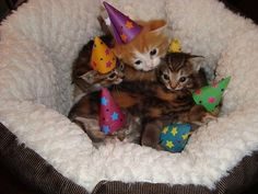 The cuteness is too much.  How do you get that many tiny hats on that many tiny kittens??