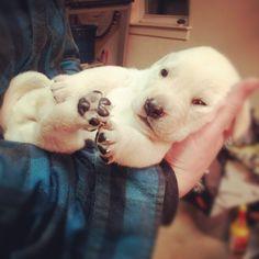 #puppy #puppy