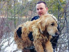 Heroic RCMP officer Const. Kris LeGresley helped save an elderly Golden Retriever from an icy pond.