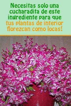 Indoor Garden, Garden Plants, Outdoor Gardens, Bonsai, Orchid Cactus, Rare Orchids, Plant Cuttings, Christmas Cactus, Live Plants