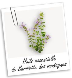 Huile essentielle Sarriette des montagnes BIO Aroma-Zone