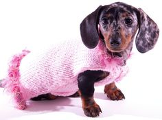 Pink Dog Sweater with Rose Trim All About Animals, Mini Dachshund, Puppy Clothes, Best Dog Breeds, Pink Dog, Puppy Pictures, Fur Babies, Cute Dogs, Dogs And Puppies