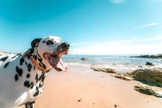 Dog Photos, Dog Pictures, Animal Pictures, Beach Pictures, Norfolk, Dog Wheelchair, Hampshire, Pet Safe, Dog Names