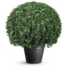 Improvements Boxwood Ball Artificial Topiary ($170) ❤ liked on Polyvore featuring home, home decor, floral decor, plants, flowers, decorative, filler, artificial outdoor topiary, outdoor flower planters and faux plants