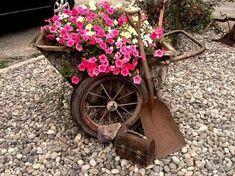 Join the garden 'Rusty Rust Club'