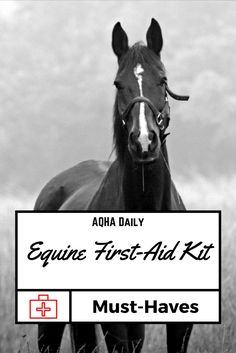 Are these important supplies in your equine first-aid kit? #HorseHealth