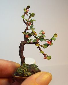 Miniature Azalea Bonsai sold on Etsy.S)