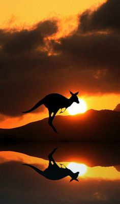 Australian Wildlife Reflection (by Heaven`s Gate (John)) Kangaroo silhouette Wildlife Photography Tips, Reflection Photography, Photography Ideas, Cool Pictures, Cool Photos, Beautiful Pictures, Animal Pictures, Funkturm Berlin, Example Of Reflection